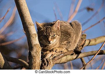 Little cute gray kitten on tree in outdoor garden with blurry background, focus on eyes