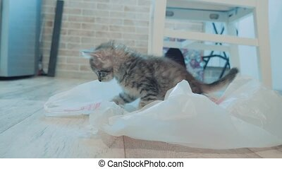 little cute kitten playing with plastic cellophane package....