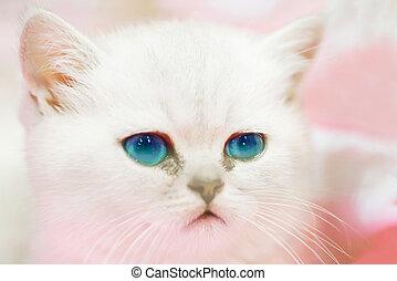 Little cute sad white cat