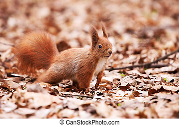 Little cute squirrel on the leaves