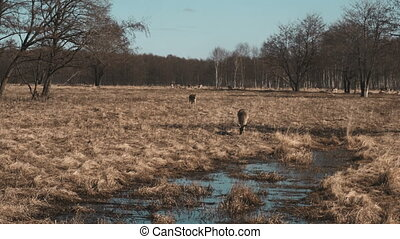 Little deer walks on a safari near water in autumn day....