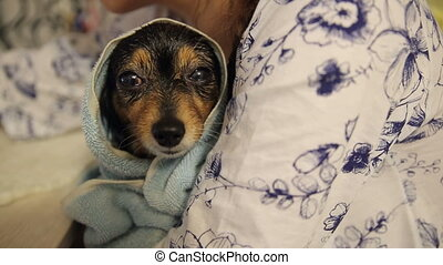 Little Dog After Bathing