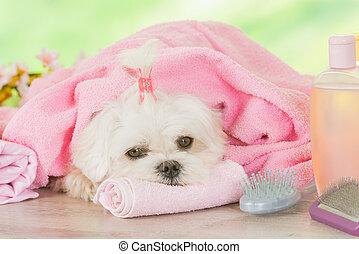 Little dog at spa