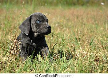 little dog in a field