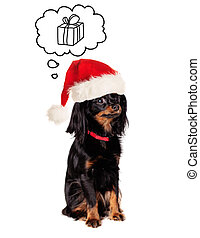 Little Dog in Santa Hat on White Background