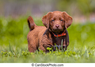 Little dog in the garden