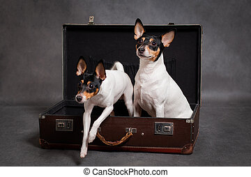 Little dog jumps out of suitcase