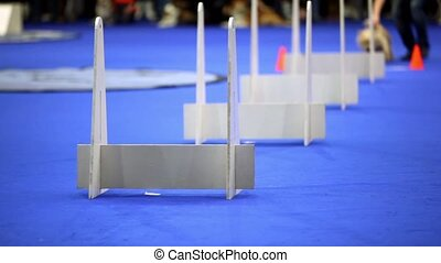 Little dog of terrier breed run and jump over barriers on agility competition