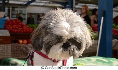Little Dog Waiting Close-Up