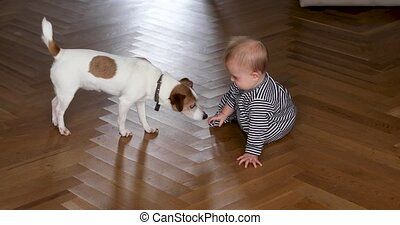 Little dog walks up to baby with interest - Puppy approaches...