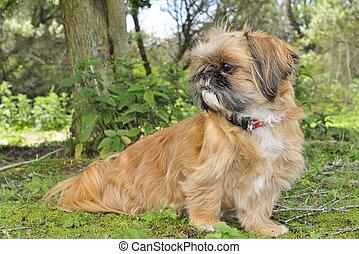 Little dog watching