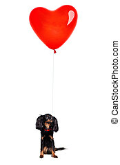 Little Dog with a Red Balloon Heart
