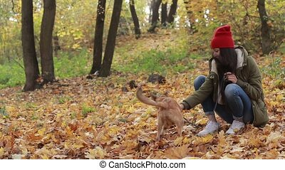 Little dog with owner playing in autumn park