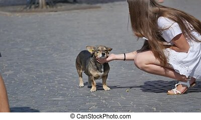 Little dog with owner spend a day at the park playing and having fun