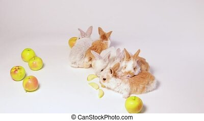 Little domestic rabbits play and eat apples on a white background. Food for the rabbit, vitamins. For veterinary clinic, medicine and animal shop, funny video