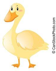 Little duck on white background