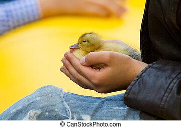 little duckling in children's hands