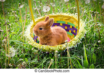 Little easter bunny in the basket on green meadow