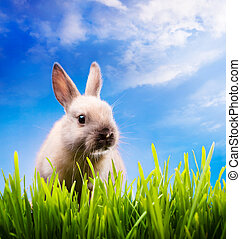 Little Easter bunny on green grass