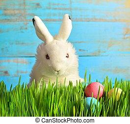 Little Easter bunny on green grass