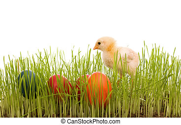 Little easter chick with colorful eggs in the grass
