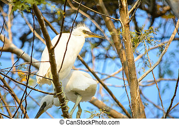 Little Egret Sitting On A Tree