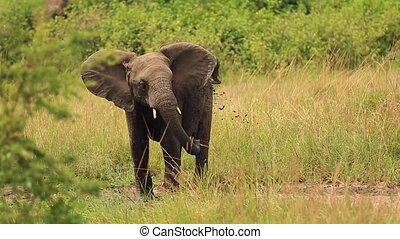Little elephant playing and splash water from a puddle