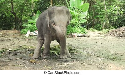 Little Elephant stock footage video - Small beautiful...