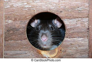 little fancy mouse in a little wooden house