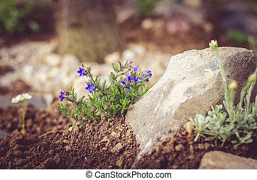rock-garden - little flowers in rock-garden