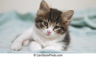 little fluffy cute funny kitten portrait indoors. cute a...