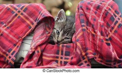 Little fluffy kitten muzzle - Little fluffy kitten in a...