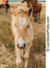 Little foal in the field