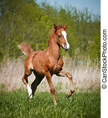foal - little foal
