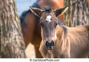 little foal with the funny ears