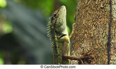 Little Forest Lizard, Clinging to Tree Bark in Thailand....