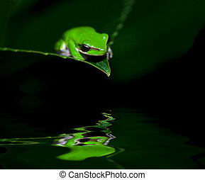 little frog in contemplation