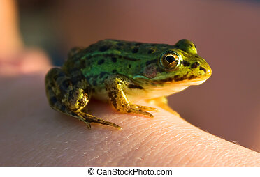 Little frog in his hand