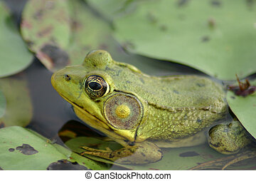 Little frog sitting in a thriving wetland.