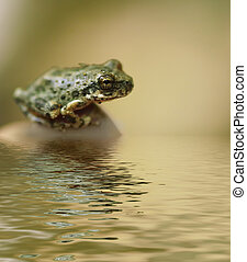 Little frog sitting close to water