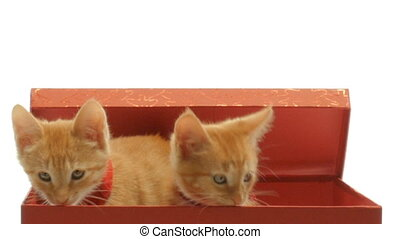 Little funny kittens playing