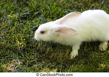 Little funny rabbit running on the field in summer.