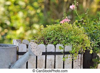 little garden with green plants
