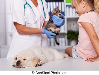 Little girl at the veterinary with her sleeping puppy dog - checking out a kitten