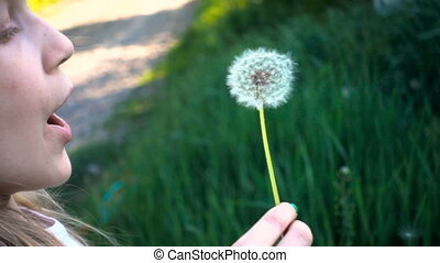 little girl blowing at the dandelion flower on a green lawn