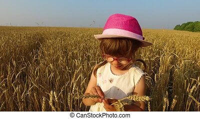 Little girl checks the quality of wheat grain.Wheat turned yellow. Soon it will begin harvesting.