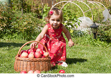 little girl collects the apples scattered on a grass in a basket