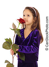 Little girl dreaming with a rose, isolated on white