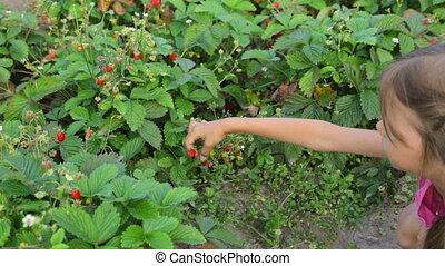 Little girl eating wild strawberries