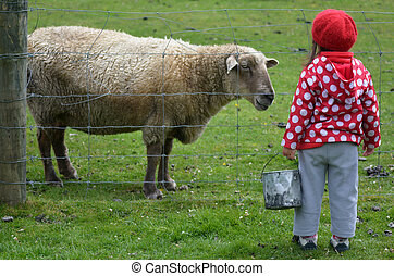 Little girl feed animal - Little girl feeds sheep in the ...
